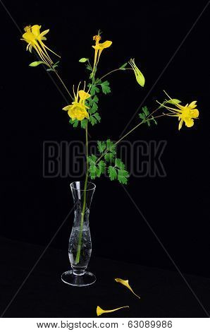 Columbine In Crystal Vase