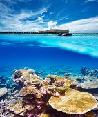 Beautiful beach with coral reef bottom underwater and above water split view poster