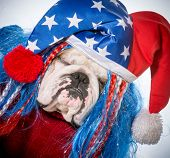 american dog - english bulldog wearing patriotic hat poster