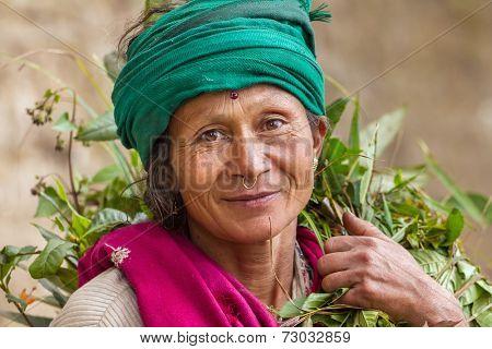 DARJEELING, INDIA - MARCH 17: Portrait of an  unidentified woman tea picker March 17, 2013 in Darjeeling, India.