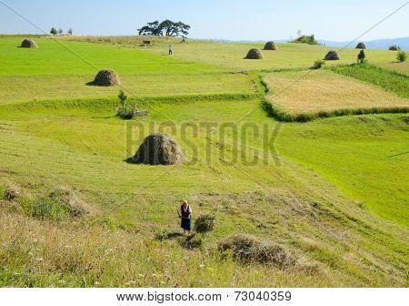 KAMENA GORA - SERBIA - AUGUST 14, 2014: agricultural work in the green fields of Kamena Gora highland.