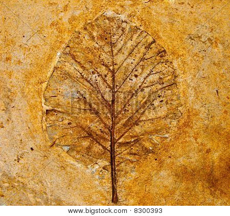 The Leaf Imprint In Concrete