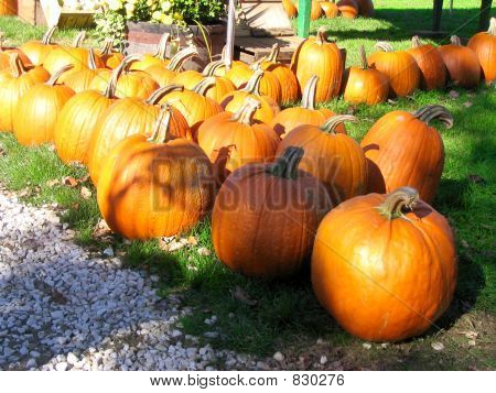 Pumpkins for sale in a yard poster