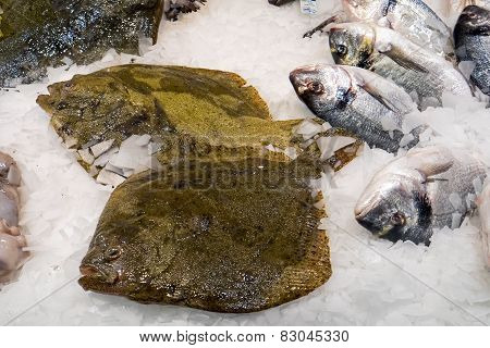 Fresh plaice for sale