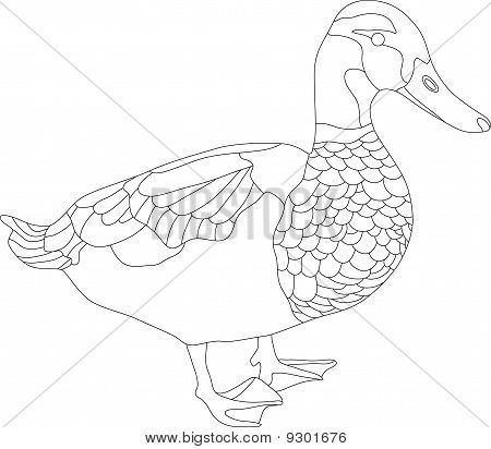 vector - drake isolated on white background poster