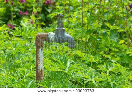 Weathered Tap Or Faucet Standing In A Garden