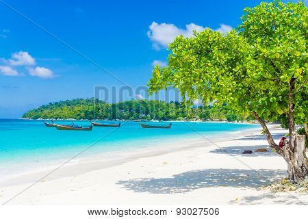 Green Tree On White Sand Beach Blue Sky.