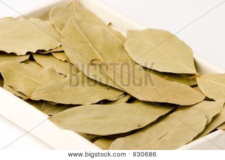 a plate with bay leaves close-up studio shot. poster