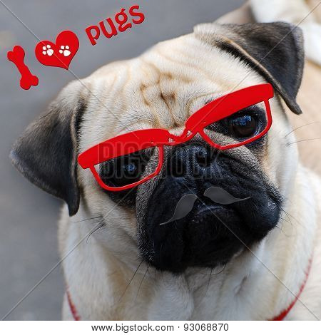 I Love Pugs With Funny Dog