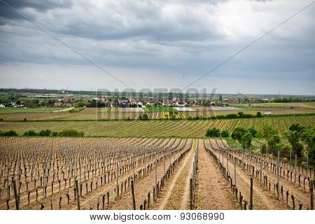 Scenic landscape view of neatly cultivated spring vineyards in Laumersheim, Germany under a cloudy sky