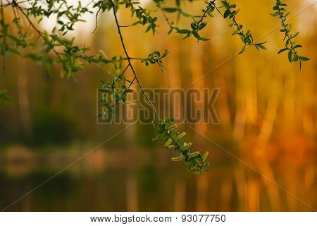 branch of a young tree on a blurred background forest summer