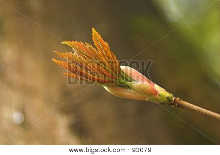 New Leaf Bud