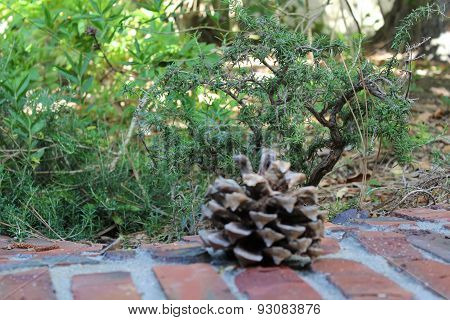 Pinecone on brick wall
