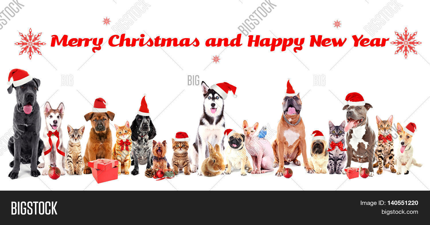 Funny Christmas Pets Image Photo Free Trial Bigstock