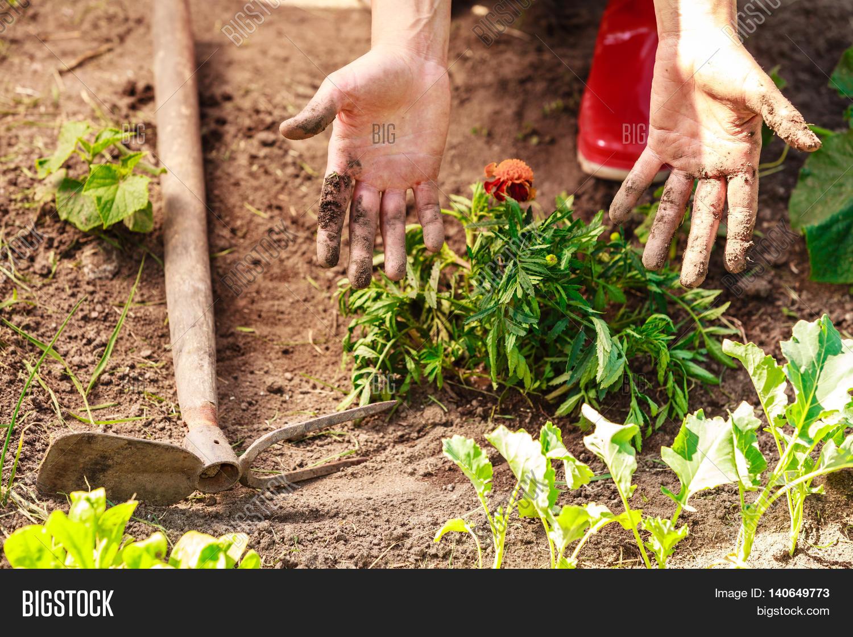 Woman Gardener Image & Photo (Free Trial) | Bigstock