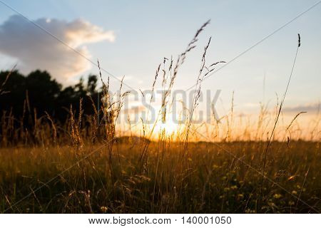 Country field in the the setting sun rays closeup, sunset backlight