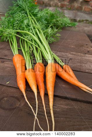 Fresh carrots with leaves on rustic wooden background. Selective focus.