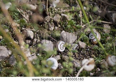 snail on the ground among the rocks closeup