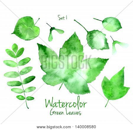 Collection of green summer watercolor leaves isolated on white background. Set 1 of maple, oak, rowan, basswood and linden tree leaves