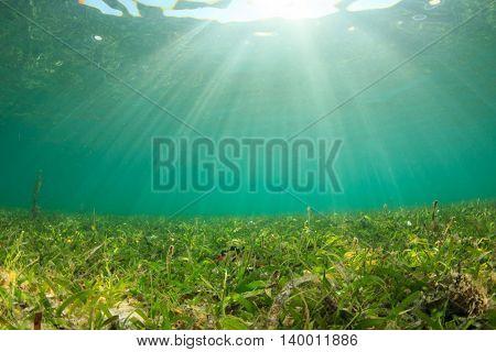 Seagrass sunlight underwater background