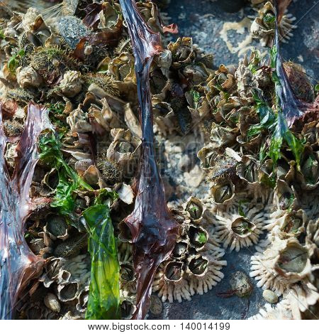 Barnacles have pulled back into their tubes hiding from the sun after the tide has left high and dry.