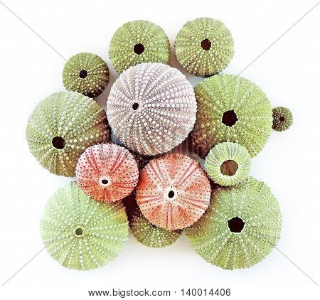 Sea urchins in different colors and sizes, isolated on white background.