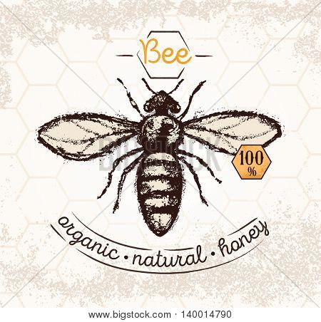 Bee, hand drawn illustrations, on the textured background and thematic inscription.