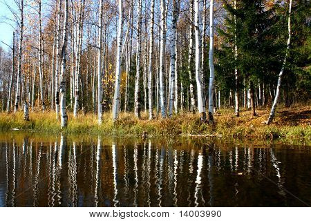 Group of trees without leaves reflected on a pond's water