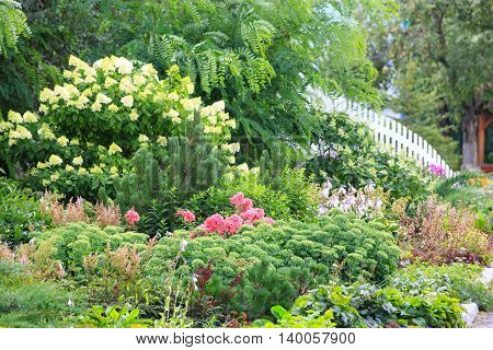 A blooming garden a lot of white and red flowers and white picket fence.