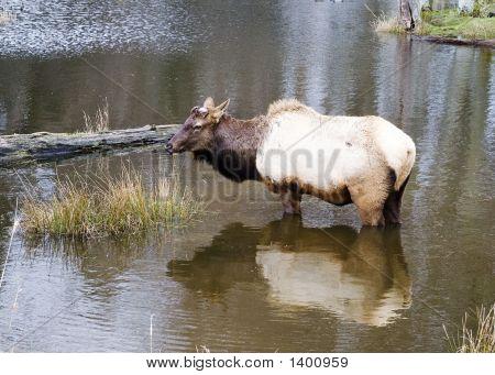 Elk_Lake2