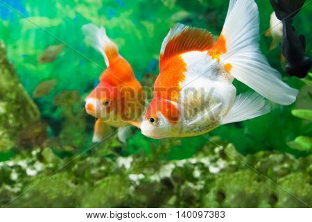 Floating Fishes In An Aquarium