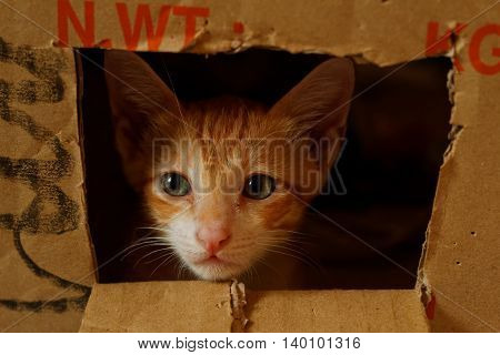 Cat with sad looking eyes looking out from a hole cut out of the box. Low light lighting to emphasize on the emotion.