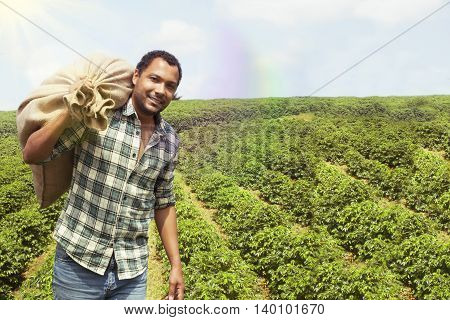 Brazilian coffee farmer at coffee plantation harvesting coffee