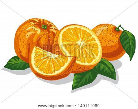 illustration of group of fresh sliced oranges with leves