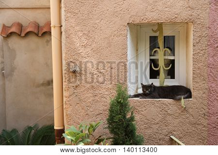 Lazy grey cat in windowsill in France