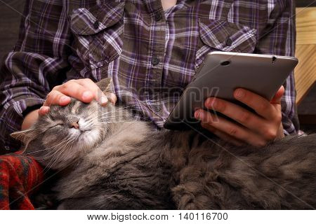 Female Hands, Teenager. The Tablet. Fluffy Gray Cat. Concept, Idea - The Convenience, Comfort, Commu