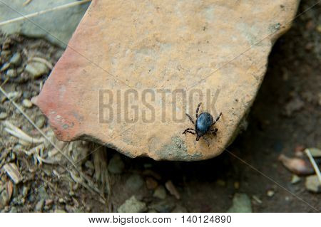 brown mite sitting on a rock close up