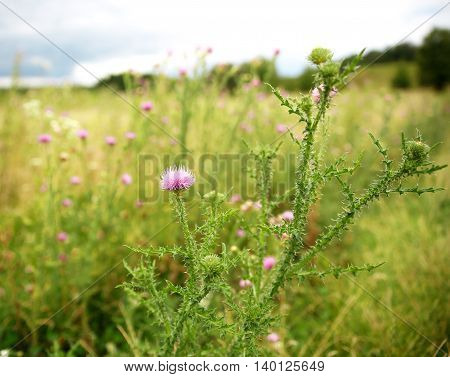 beautiful wild flowers on a sunny meadow photo for micro-stock