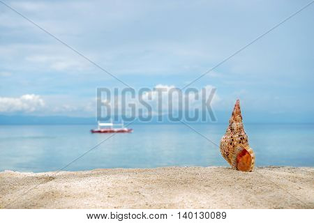 Marine brown conch of shelfish on the white sand tropical beach with turquise sea and diving philippine boat background