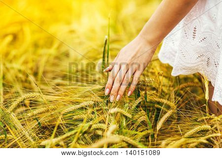 Male hand touching a golden wheat ear in the wheat field sunset light flare light. Unrecognizable person copy space
