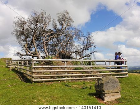 LLANFYLLIN, WALES, JULY 1. The Lonely Tree on July 1, 2016, near Llanfyllin, Wales. Two women pay their respects to the Lonely Tree Wales' tree of the year for 2014 after it blew down in a severe gale.