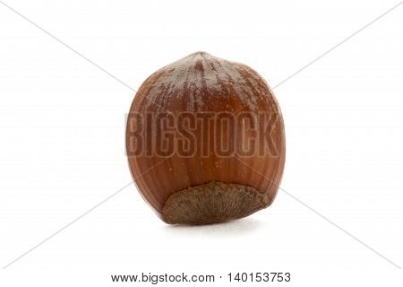 hazel nut isolated on a white background