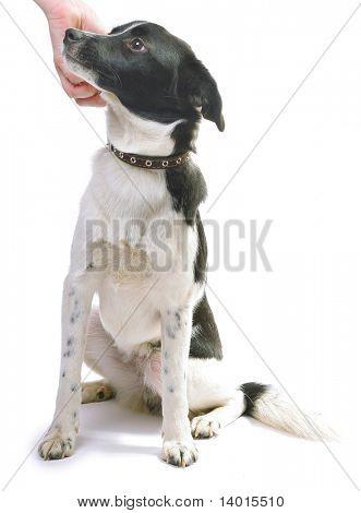 Mongrel dog and human hand poster