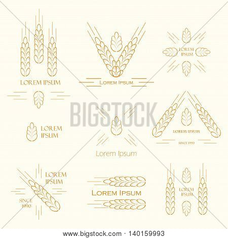 Ears of wheat logo design for beer brewery wheat factory. vector label sign with spica. Logo set for farming growing cereals