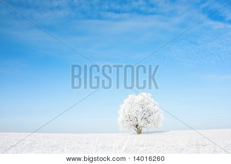 Alone frozen tree in field and blue clear sky