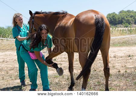 Veterinary for horses on the farm doing healing work on one leg