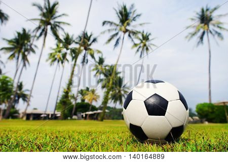 Soccer ball lies on a green field on the background of palm trees and the sky