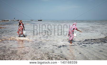 NUNGWI, ZANZIBAR/TANZANIA - JANUARY 26: Two women collect shelves near ocean coast on January 26, 2016 in Nungwi, Zanzibar/Tanzania