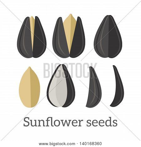 Sunflower seeds vector in flat style design. Traditional raw, salty, fried snack, diet product, culinary ingredient, source of vitamins, elements, fatty acids and oil. Isolated on white background.