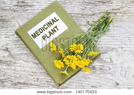 Cota tinctoria synonym Anthemis tinctoria (golden marguerite yellow chamomile oxeye chamomile) and herbalist handbook on old table. Used in herbal medicine and for the production of yellow dyes